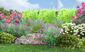 Salvia Greggii Garden 8